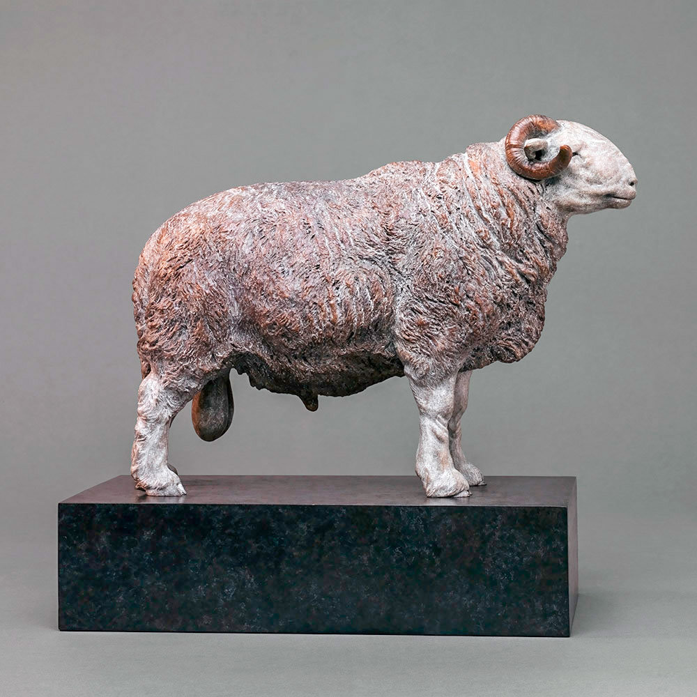 Herdwick Sheep by Nick Bibby