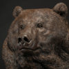 Kodiak Brown Bear (Indomitable) by Nick Bibby