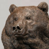 Kodiak Brown Bear (Indomitable - Head Study) by Nick Bibby