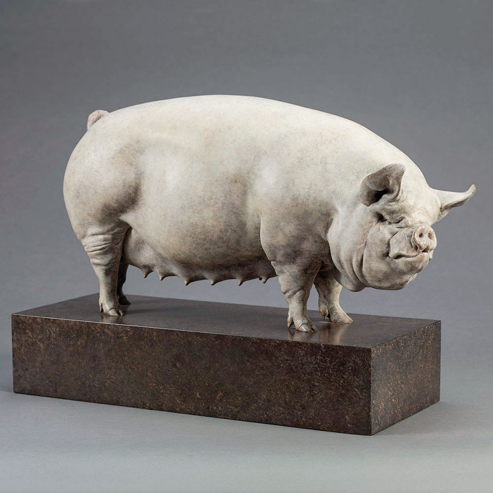 Middle White Pig (Alice) by Nick Bibby