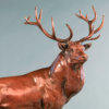 Red Deer Stag (The Emperor of Exmoor) by Nick Bibby
