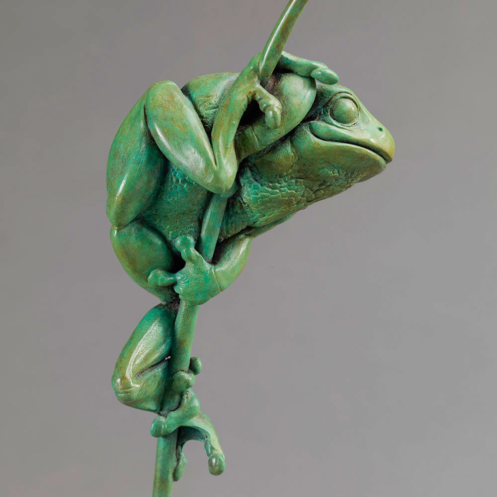 Tree Frog by Nick Bibby