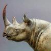 Black Rhino by Nick Bibby