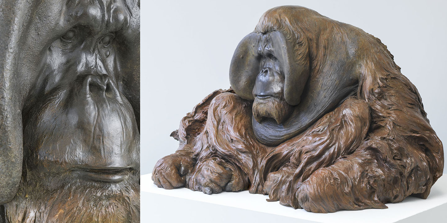 "Link To Orangutan: ""Old Man of the Forest"""