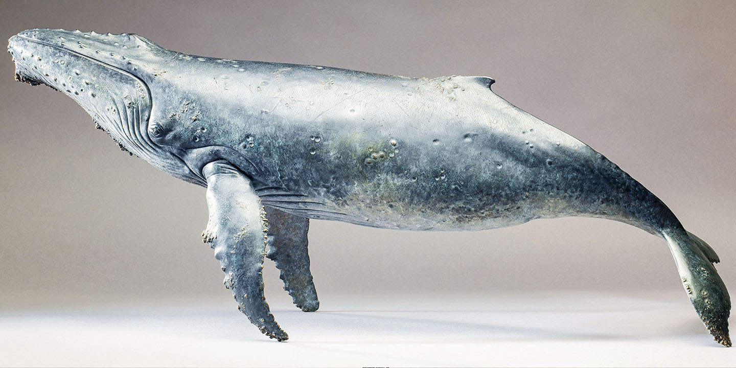 Link To Humpback Whale