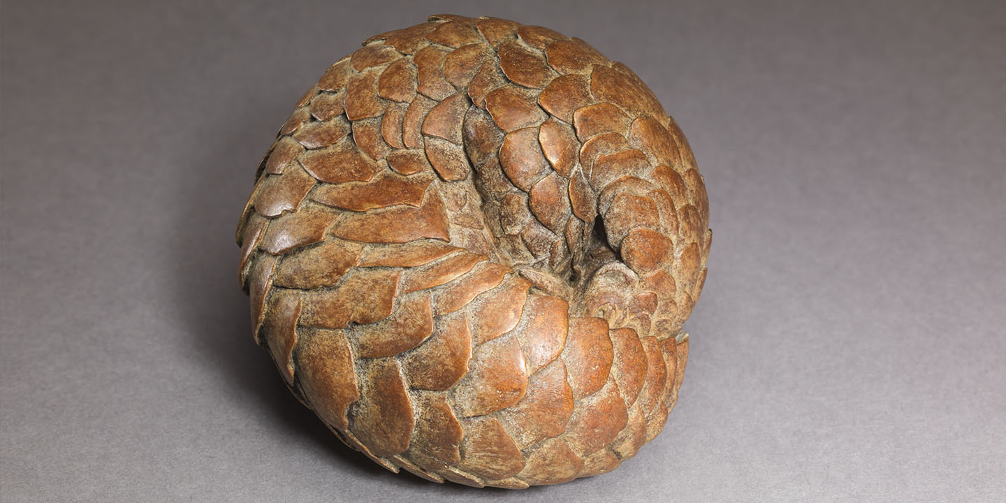 Link to Pangolin: Bronze