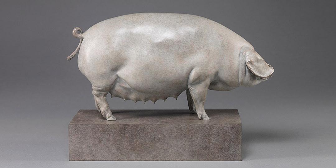 Link To British Lop Pig - Liskeard Sunshine