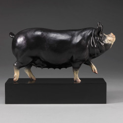 Berkshire Pig (Dittisham Lady 22) by Nick Bibby