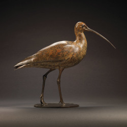Curlew by Nick Bibby