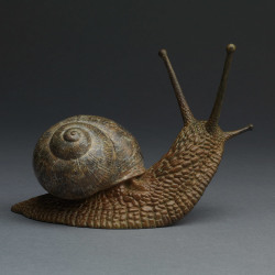 Garden Snail by Nick Bibby