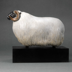 Scottish Blackface Sheep (Moortown JJ) by Nick Bibby